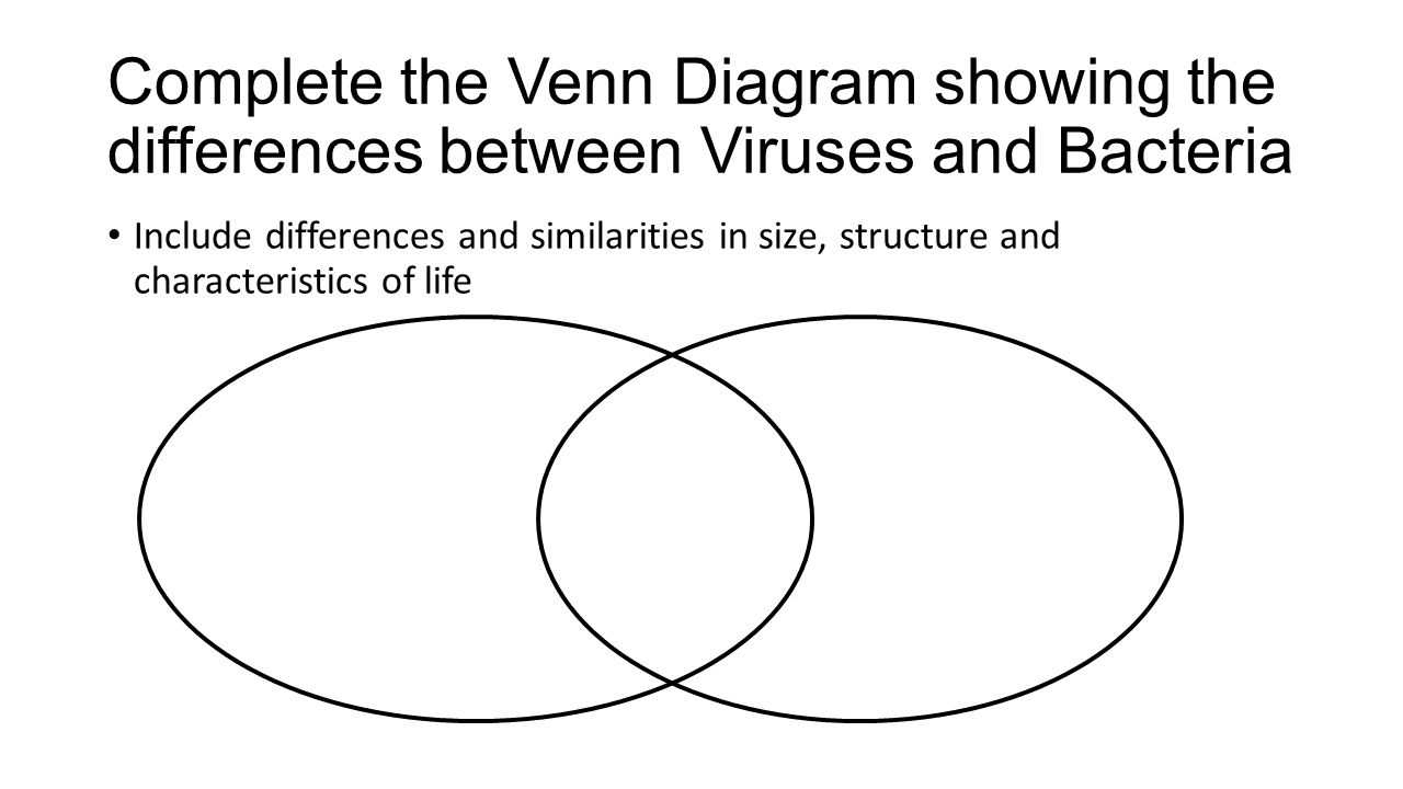 Bacteria And Virus Venn Diagram Bacteria And Viruses Do Now Complete Pre Test Meet An E Coli