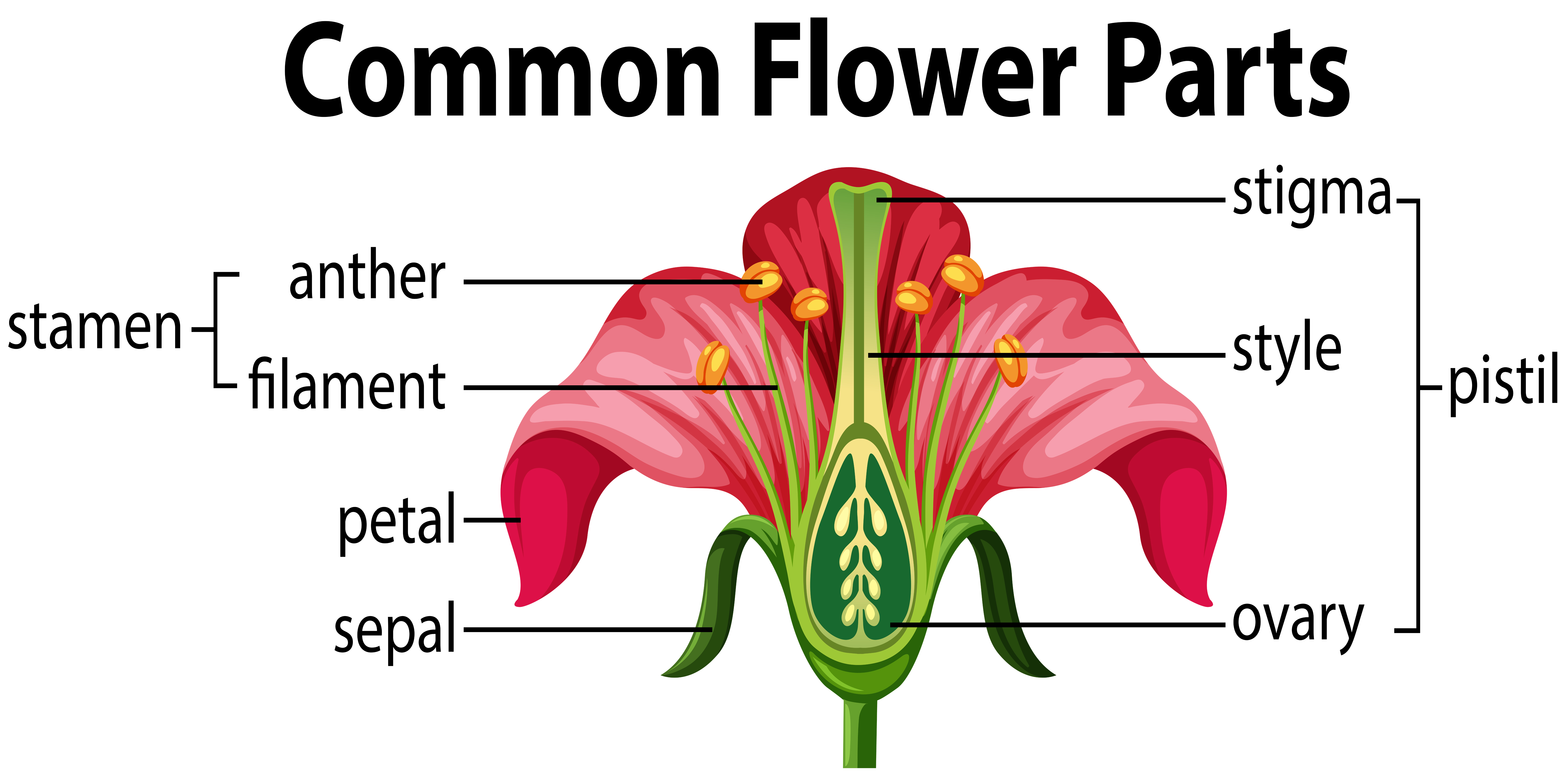 Diagram Of A Flower Diagram Of The Parts Of A Flower Hunker