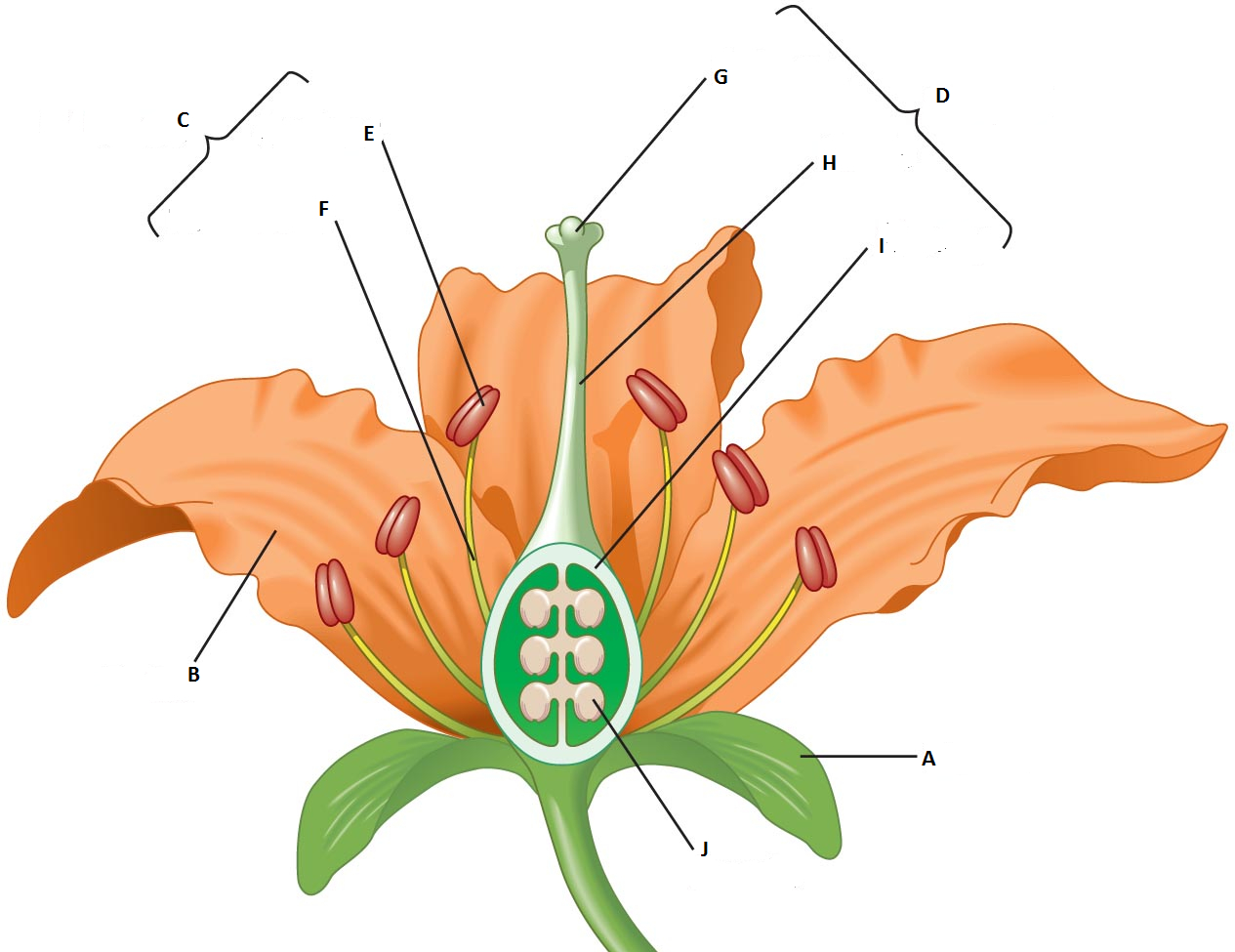 Diagram Of A Flower Diagram Quiz On Flower Parts Biology Multiple Choice Quizzes