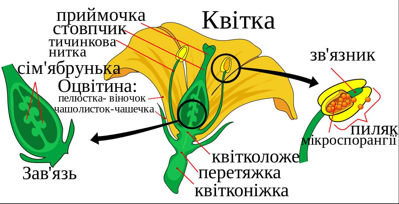 Diagram Of A Flower Mature Flower Diagram Uksvg