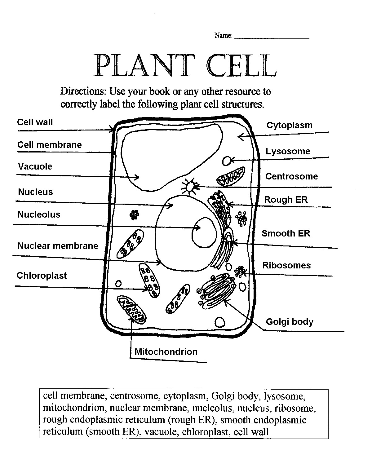 Diagram Of A Plant Cell Simple Plant Cell Drawing At Paintingvalley Explore Collection