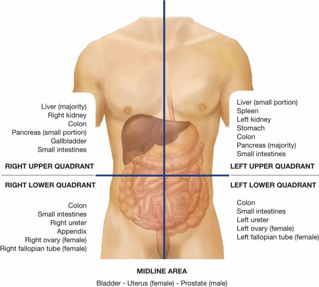 Diagram Of Abdominal Organs Where Is Your Abdomen Diagram Lovely Best 25 Quadrants Of The