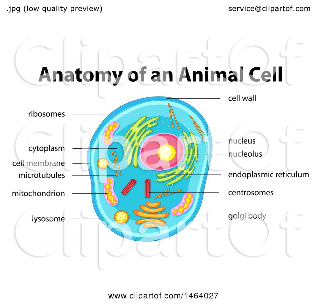 Diagram Of An Animal Cell Clipart Of A Diagram Of An Animal Cell Royalty Free Vector