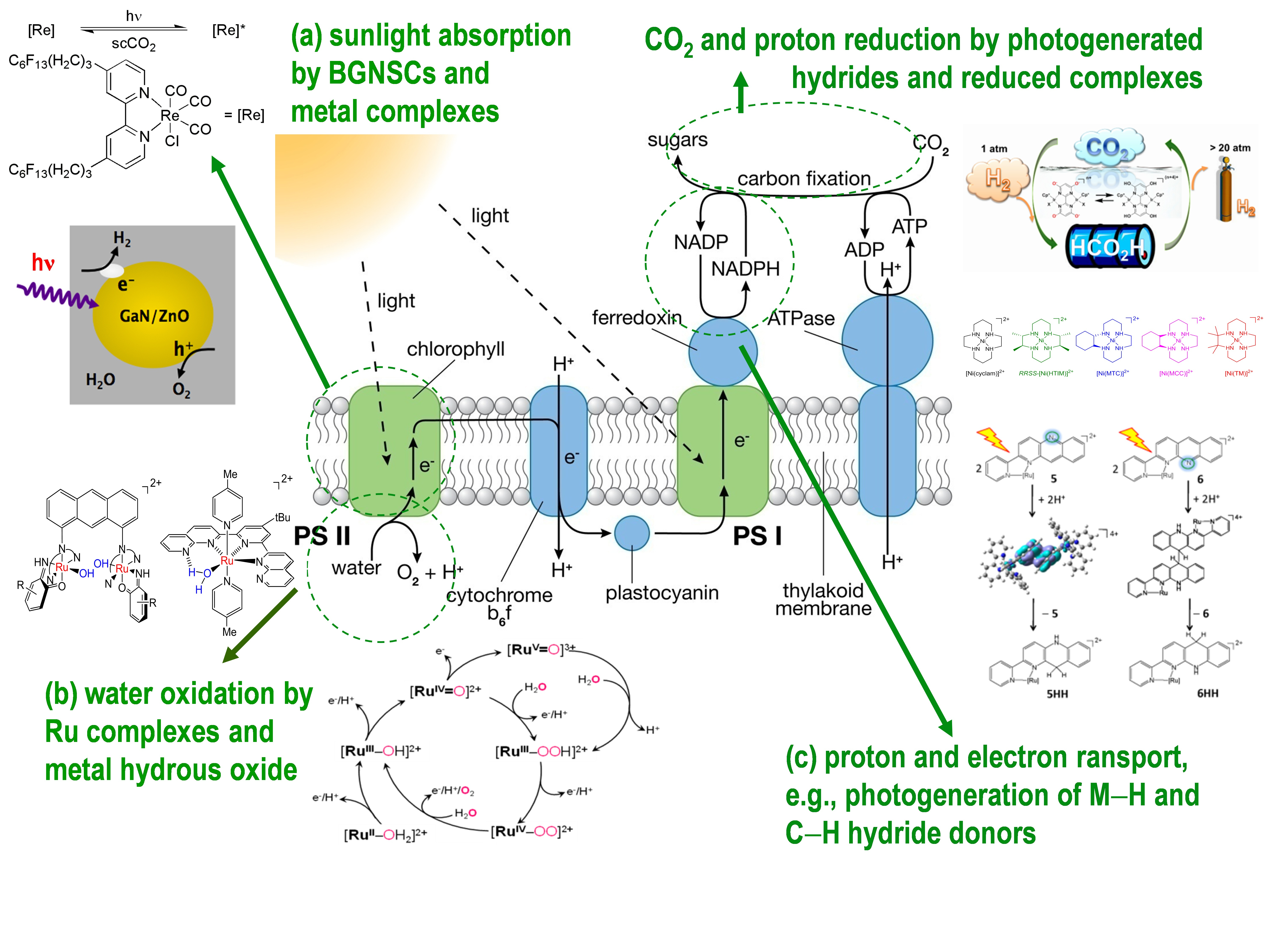 Diagram Of Photosynthesis Bnl Chemistry Artificial Photosynthesis Group