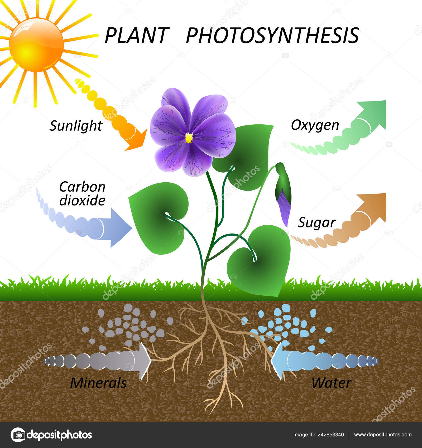 Diagram Of Photosynthesis Clipart Photosynthesis Drawing Vector Diagram Plant