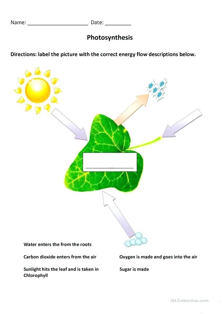 Diagram Of Photosynthesis Photosynthesis Coloring Pages Worksheets Oneupcolorco