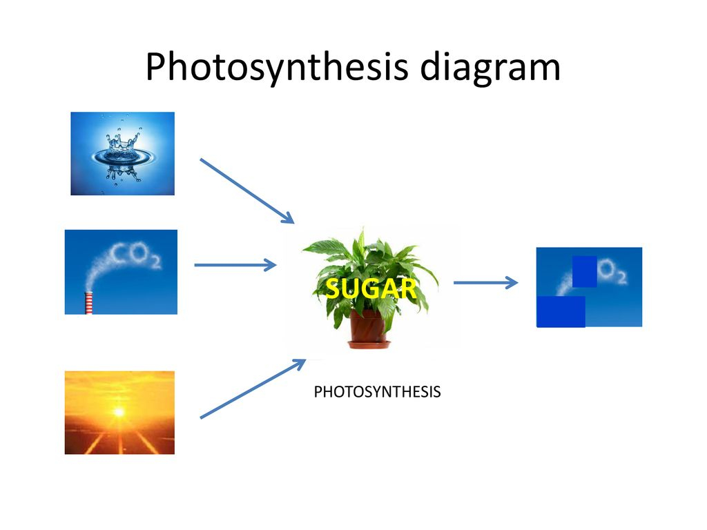 Diagram Of Photosynthesis Photosynthesis Diagram Ppt Download