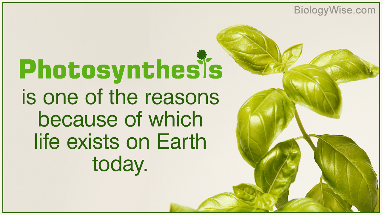 Diagram Of Photosynthesis Photosynthesis Explained With A Diagram