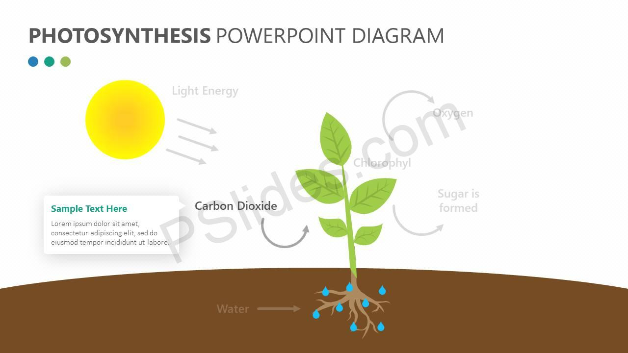 Diagram Of Photosynthesis Photosynthesis Powerpoint Diagram Pslides