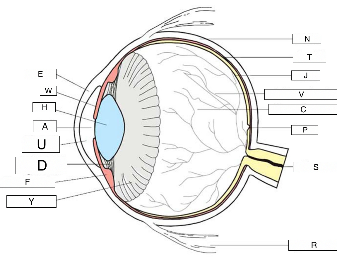 Diagram Of The Eye Vision And The Eye Lesson 1063 Tqa Explorer