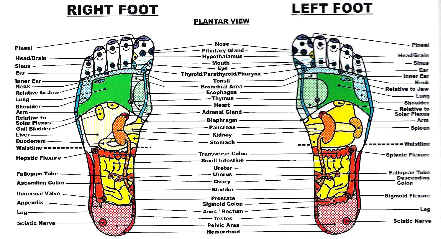 Foot Reflexology Diagram The Benefits Of Foot And Hand Reflexology Remedygrove
