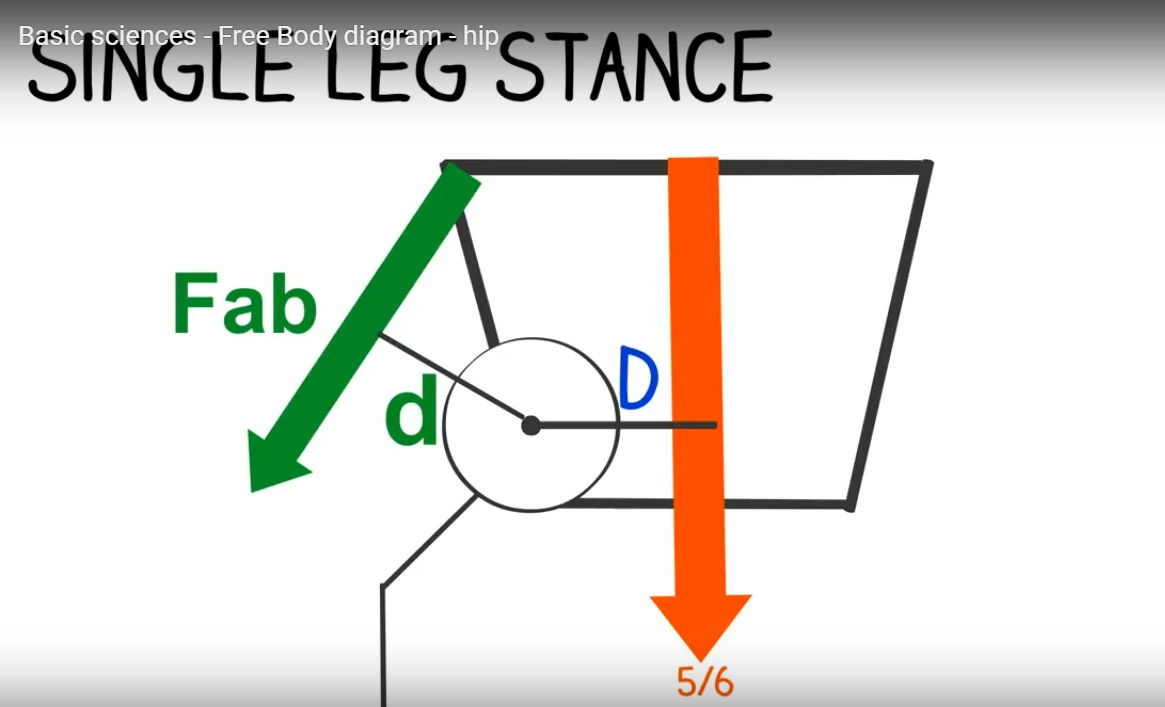 Free Body Diagram Free Body Diagram Of The Hip Joint Orthopaedicprinciples