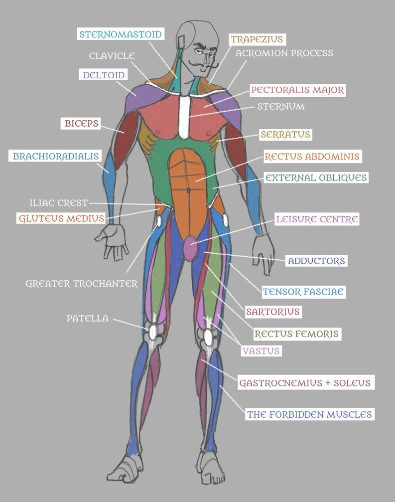 Human Muscle Diagram Coloring Human Anatomy Muscles With Labels Pseudolonewolf