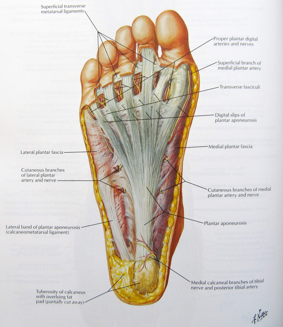 Plantar Heel Pain With Mick Hughes And Hamish The Physio Manual Guide