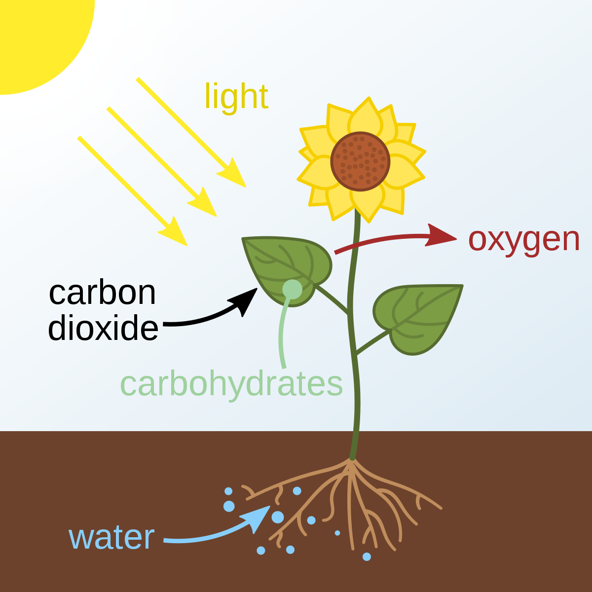 Venn Diagram Of Photosynthesis And Cellular Respiration Photosynthesis Wikipedia