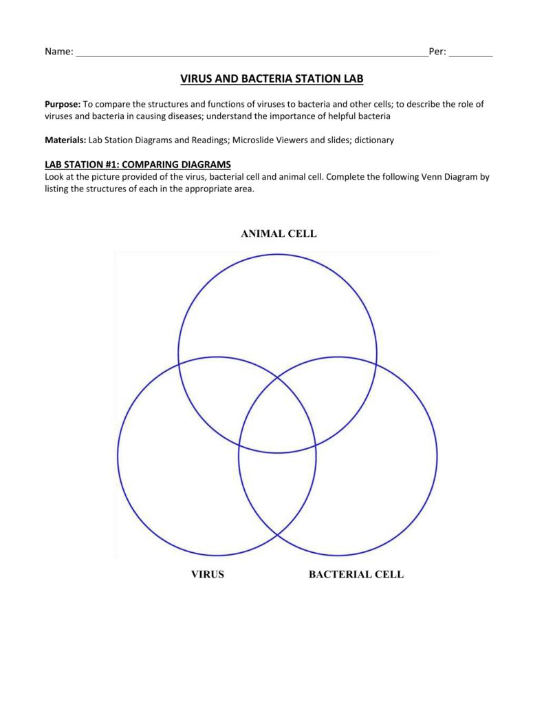 Bacteria And Virus Venn Diagram Virus And Bacteria Station Lab