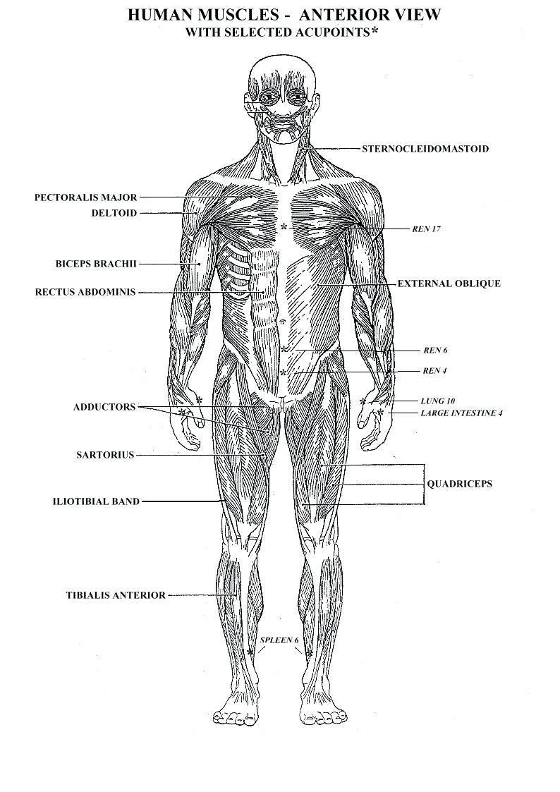 Body Organs Diagram Human Body Organs Coloring Pages Codeadventuresco