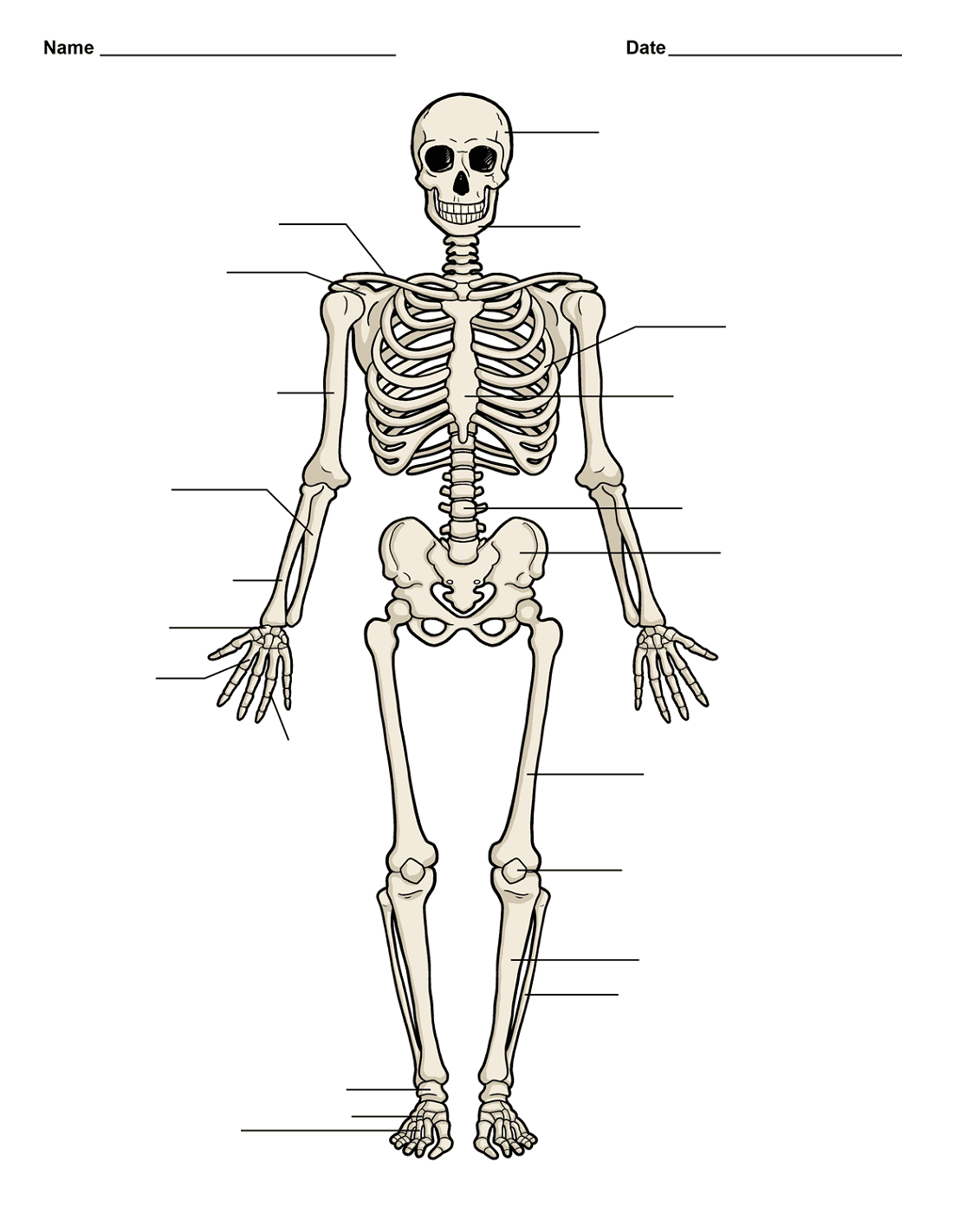 Body Organs Diagram Human Diagrams Body Skull And Organs Printable Diagram