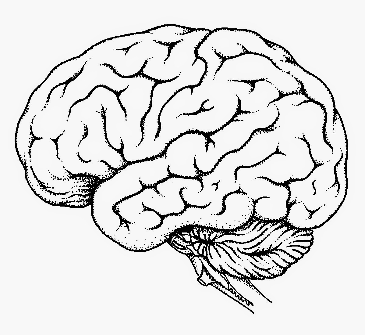 Brain Diagram Labeled Drawing Of The Brain With Labels At Getdrawings Free For