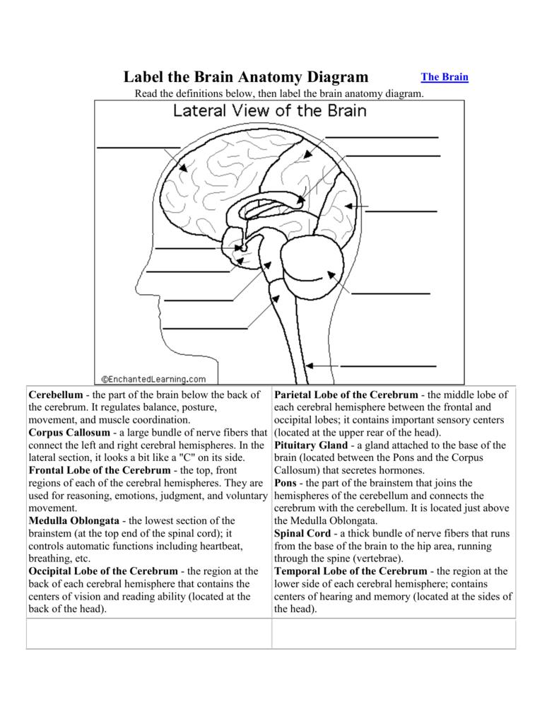 Brain Diagram Labeled Label The Brain Anatomy Diagram Windsor C