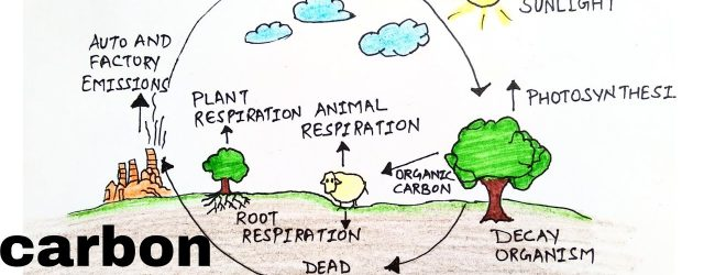 Carbon Cycle Diagram Carbon Cyclehow To Draw Carbon Cycle Diagramdiagram Of Carbon Cyclecarbon Cycle Diagramdrawing