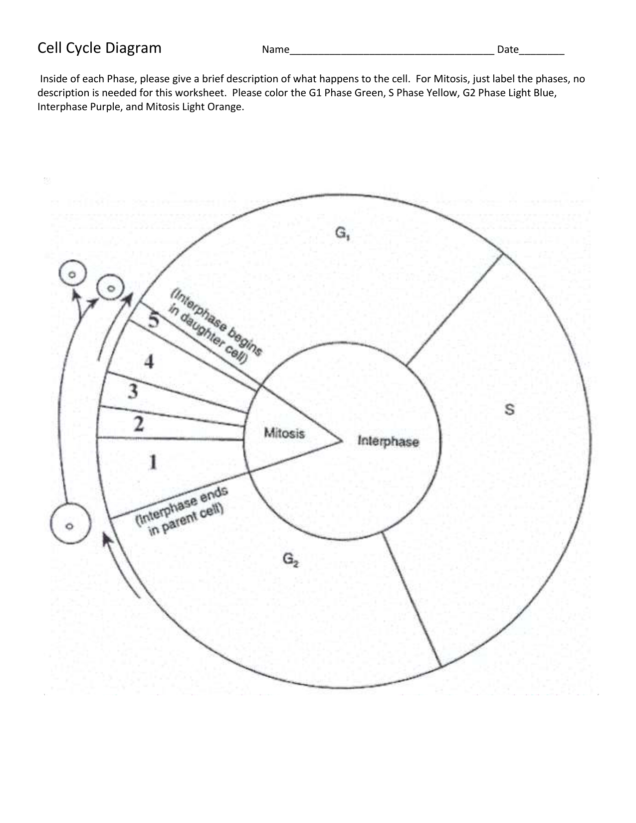 Cell Cycle Diagram Cell Cycle Diagram