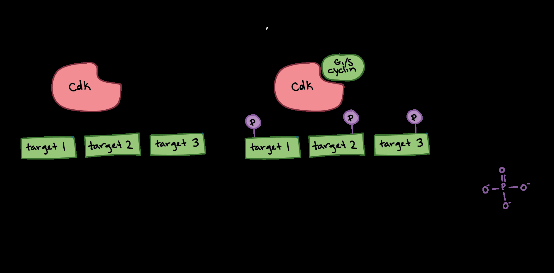 Cell Cycle Diagram Cell Cycle Regulators Article Khan Academy