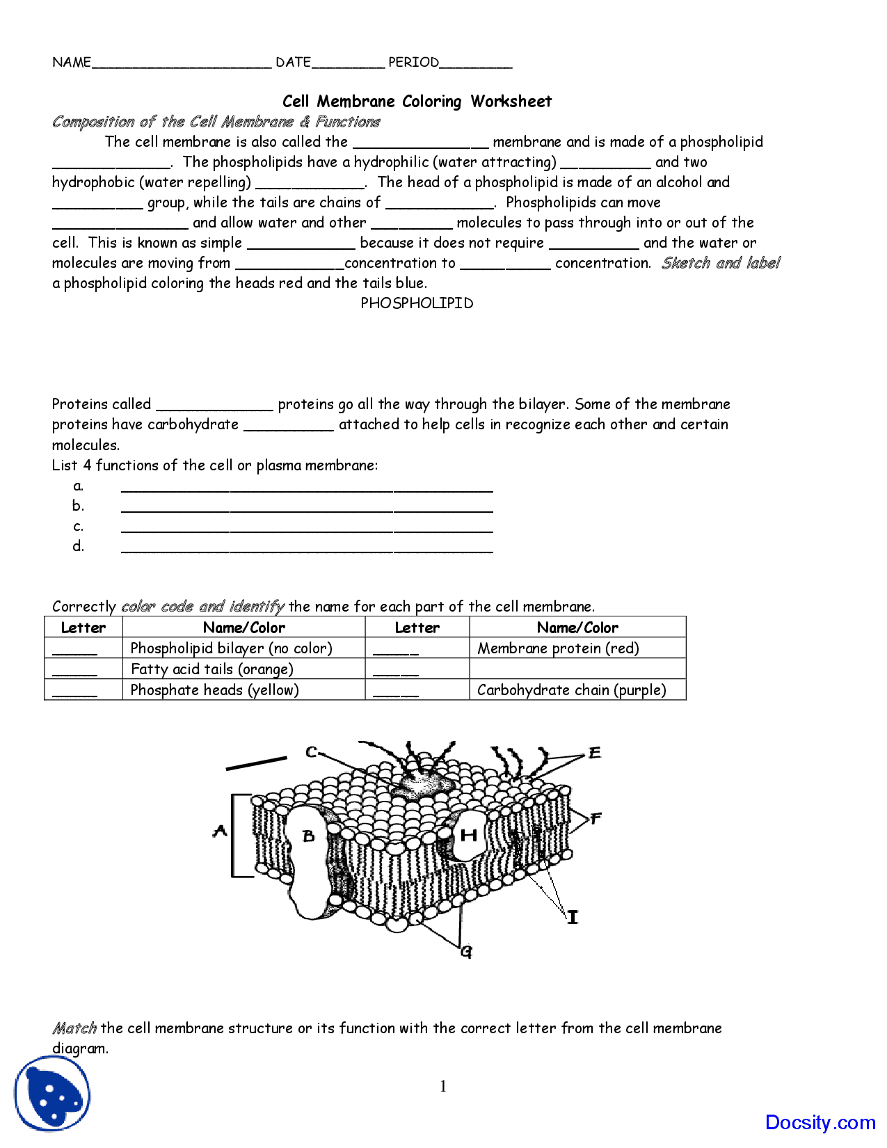Cell Membrane Diagram Cell Membrane Coloring Application Of Biology Assignment Docsity