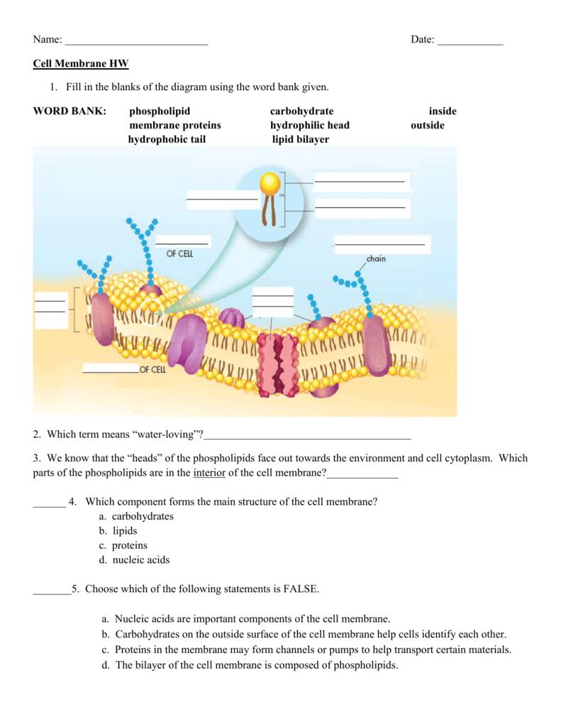 Cell Membrane Diagram Cell Membrane Hw