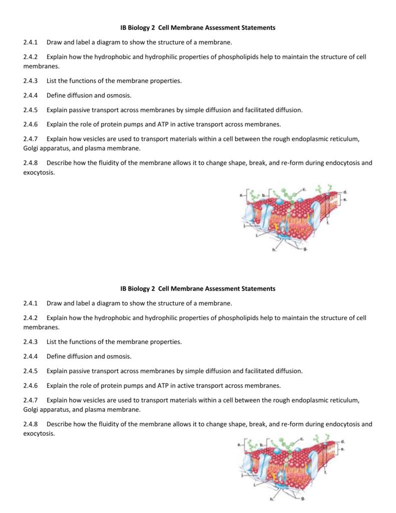 Cell Membrane Diagram Ib Biology 2 Cell Membrane Assessment