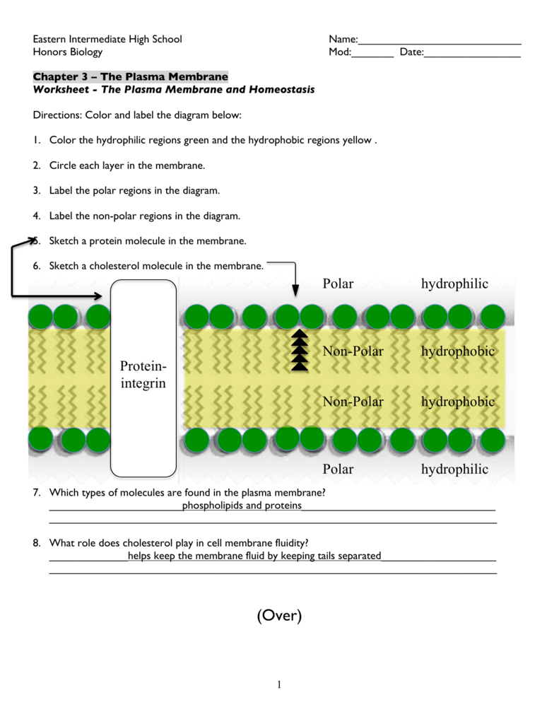 Cell Membrane Diagram Worksheet Diagram Of The Plasma Membrane Answer Key