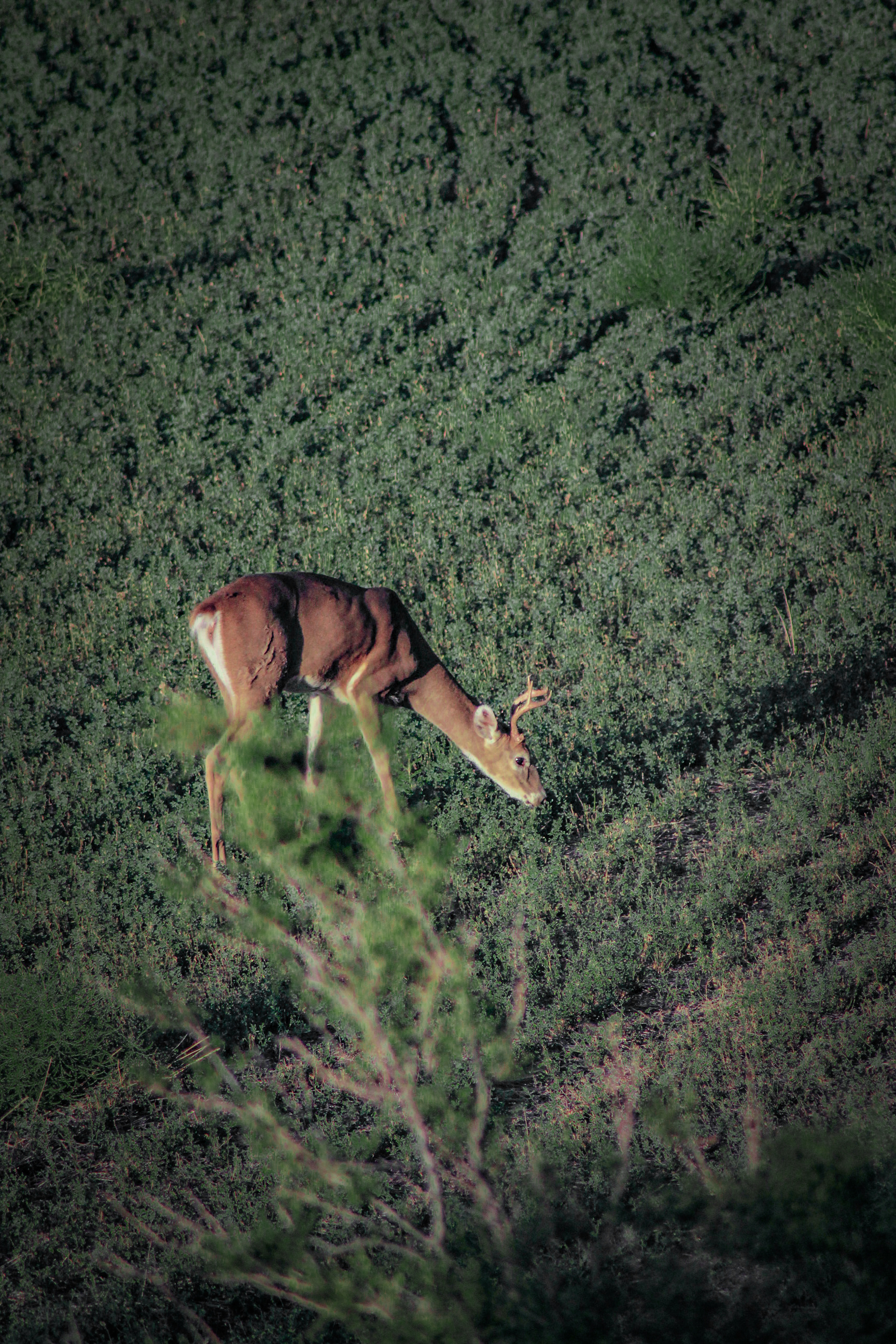 Deer Stand Placement Diagrams Bowhunting How To Where To Aim On A Whitetail Deer
