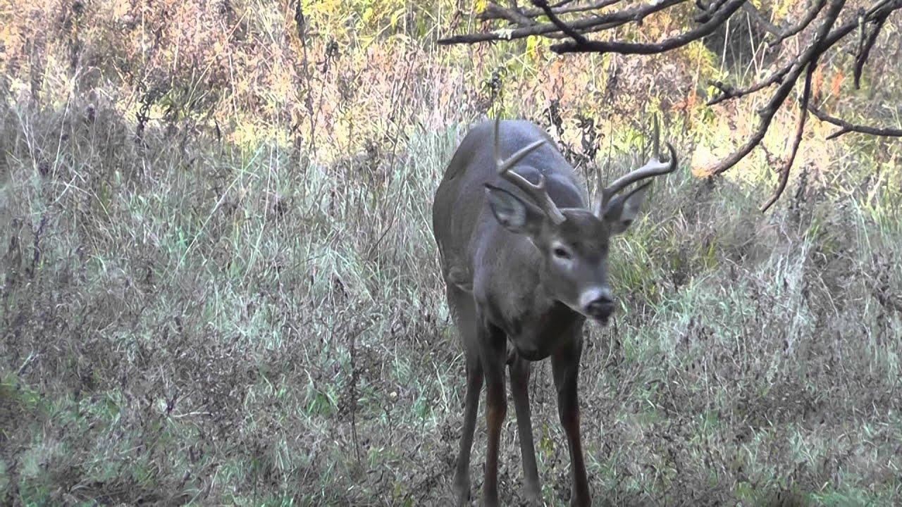 Deer Stand Placement Diagrams Drop A Deer In Its Tracks With 1 Shot Deer Deer Hunting