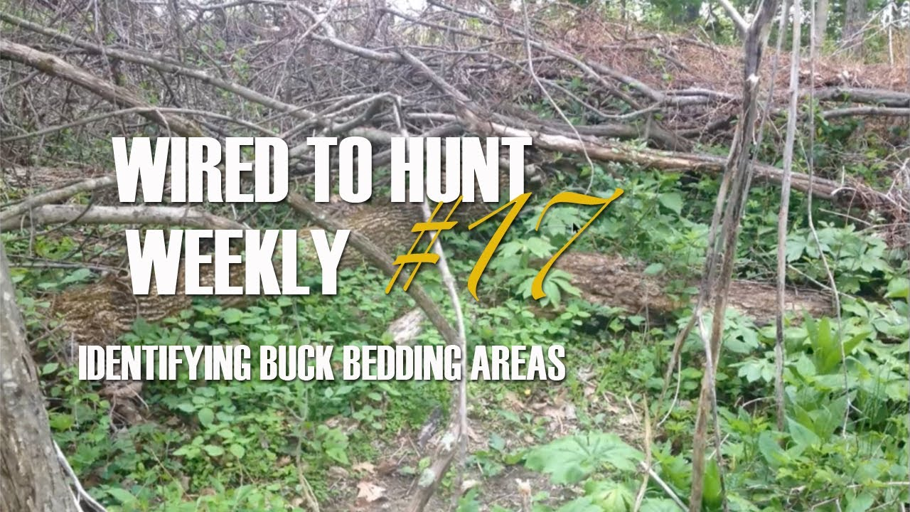 Deer Stand Placement Diagrams How To Find Buck Bedding Areas Blains Farm Fleet Blog