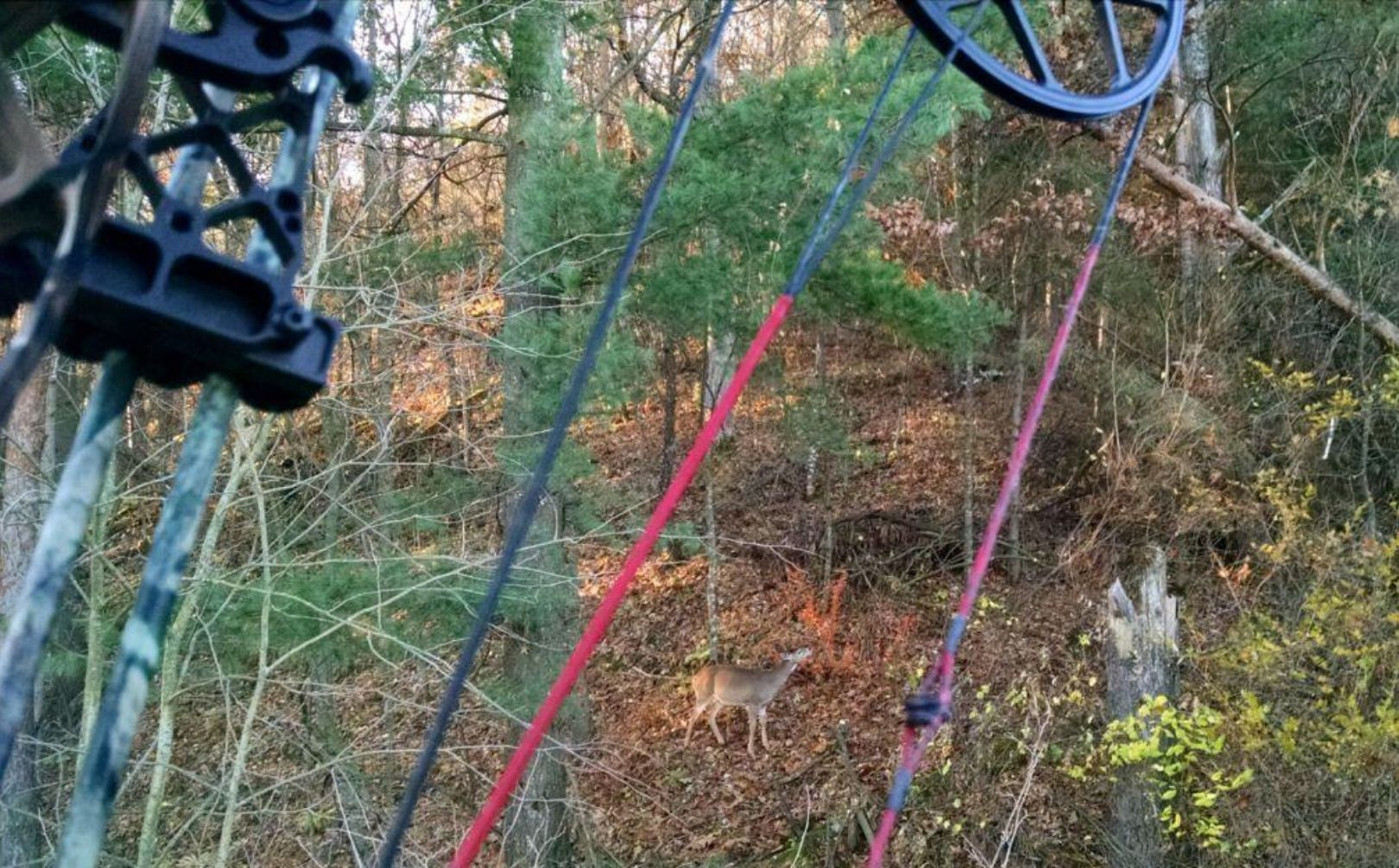 Deer Stand Placement Diagrams How To Hunt A Deer Bedding Area Whitetail Habitat Solutions