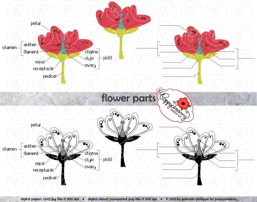 Diagram Of A Flower Flower Parts Science Diagram Clipart Set 300 Dpi School Teacher Clip Art Science Physical Science Diagram