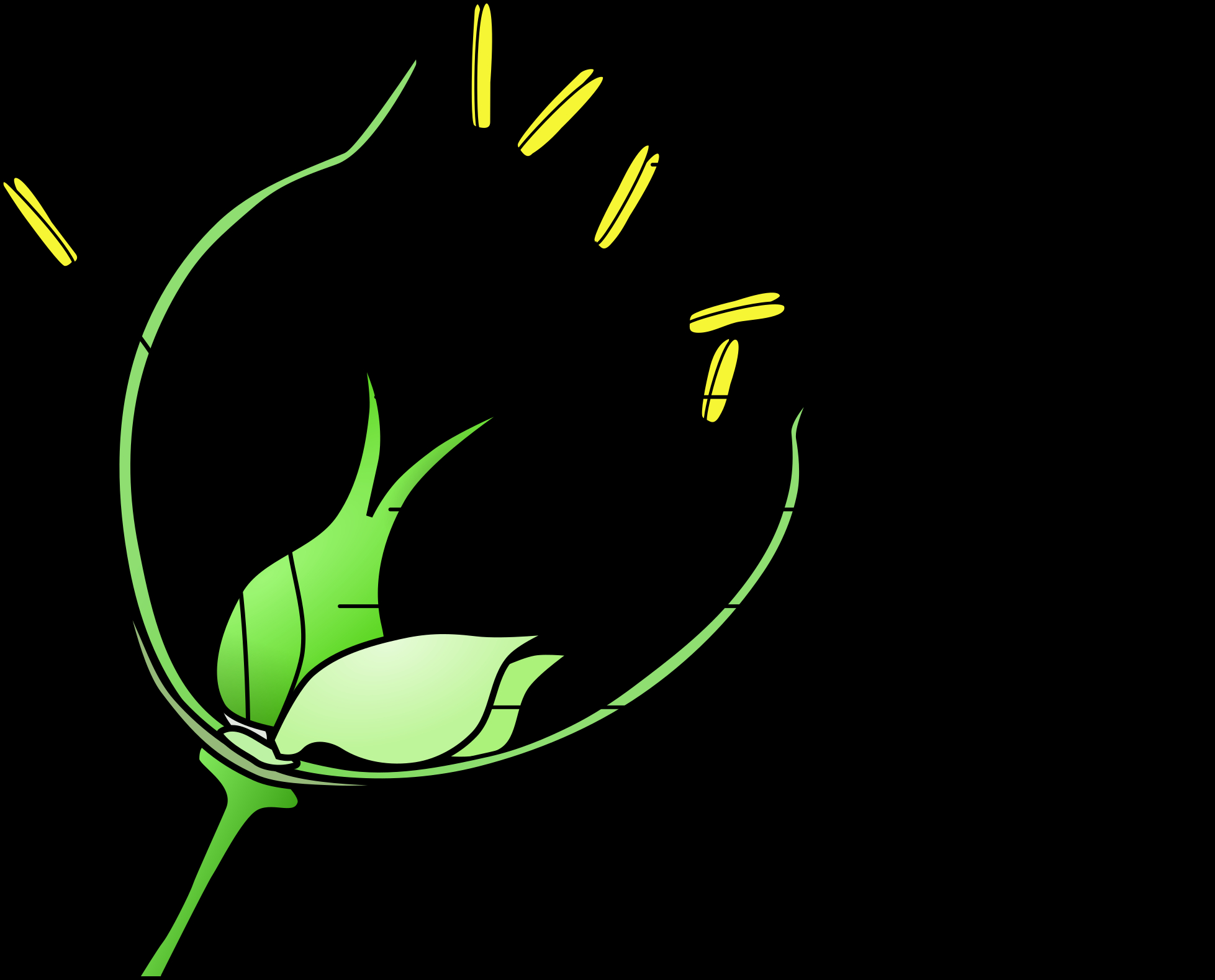 Diagram Of A Flower Hd Banner Library Download Flower Wikipedia Grass With Wind