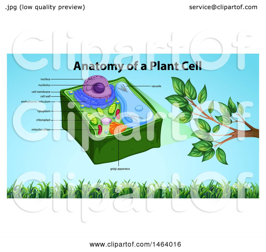 Diagram Of A Plant Cell Clipart Of A Diagram Of A Plant Cell Royalty Free Vector