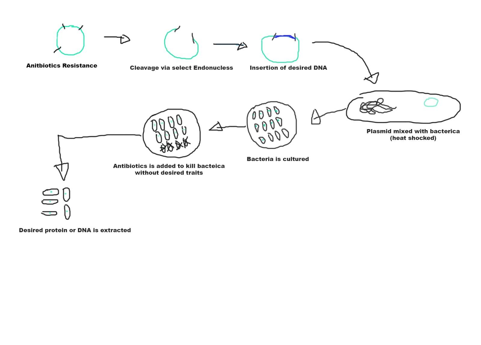 Diagram Of Bacteria Dinesh Kumar Ba Hons Computer Animation Arts Uca Rochester