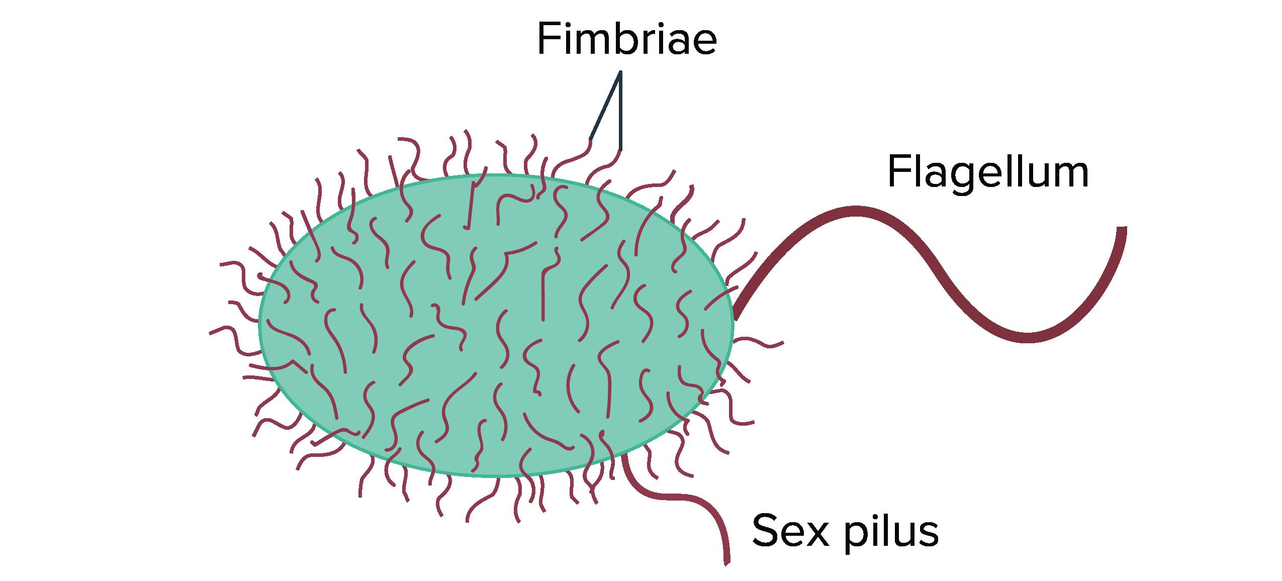 Diagram Of Bacteria Prokaryote Structure Article Khan Academy