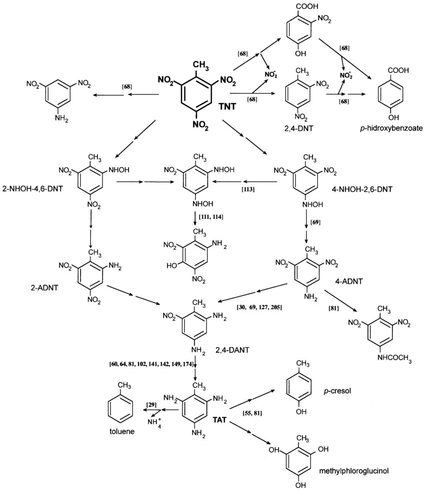 Diagram Of Bacteria Proposed Mechanisms For Anaerobic Tnt Metabolism In Bacteria The