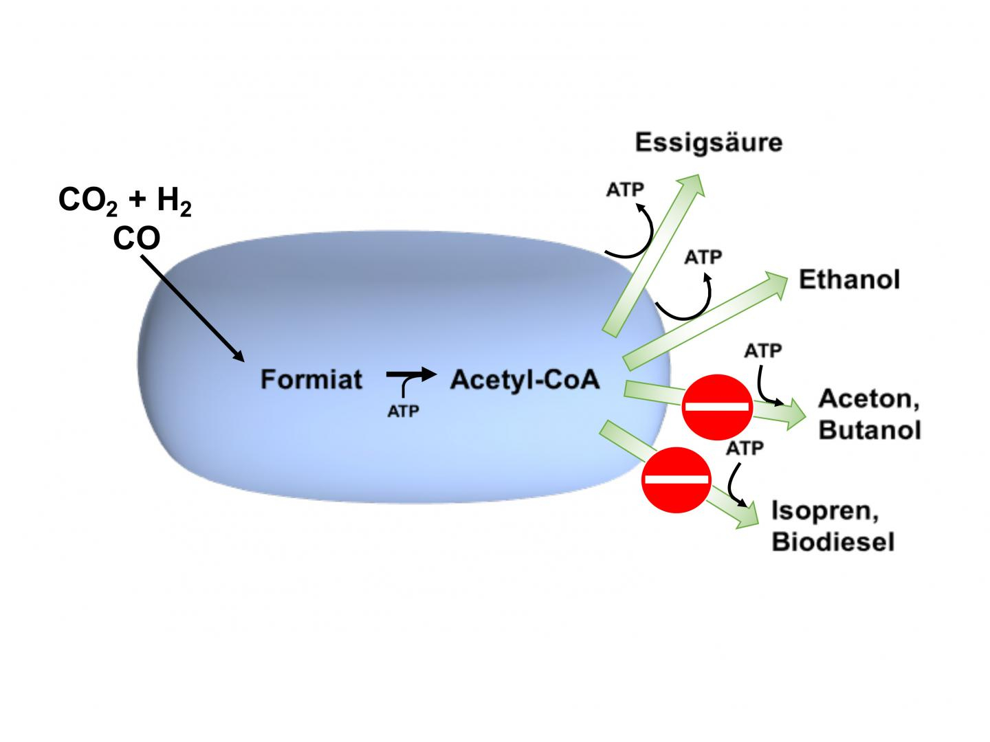 Diagram Of Bacteria Use Of Bacteria To Produce Valuable Substances From Carbon Dioxide