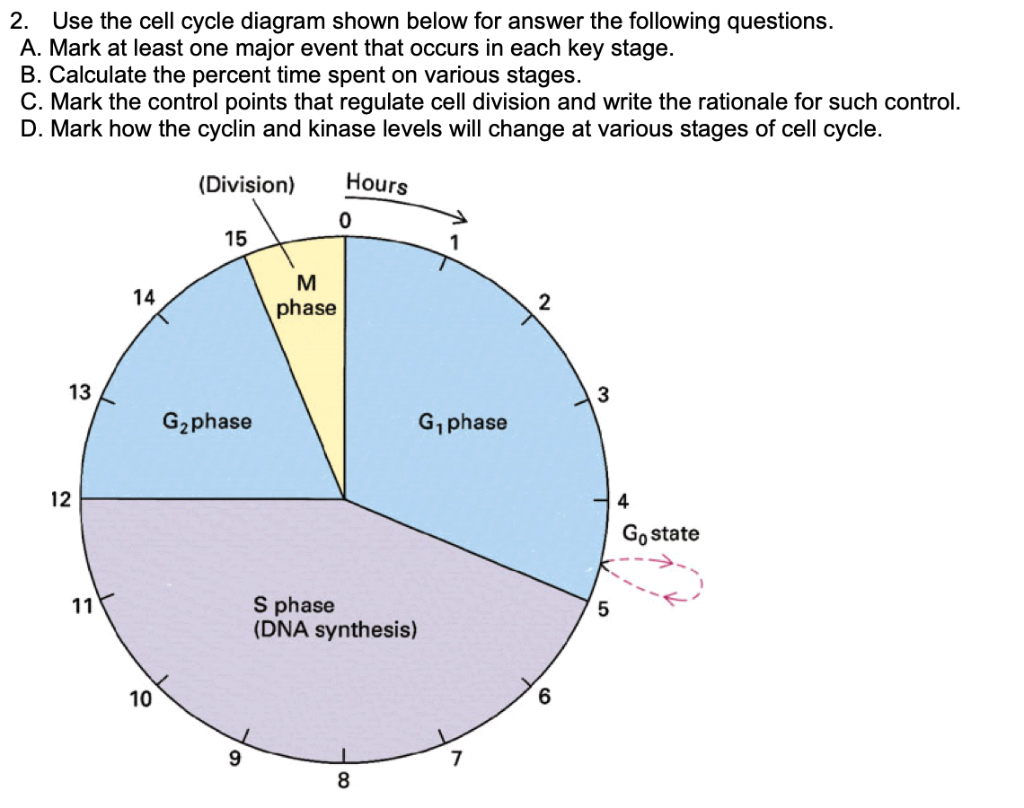 Diagram Of Cell Cycle Solved Use The Cell Cycle Diagram Shown Below For Answer