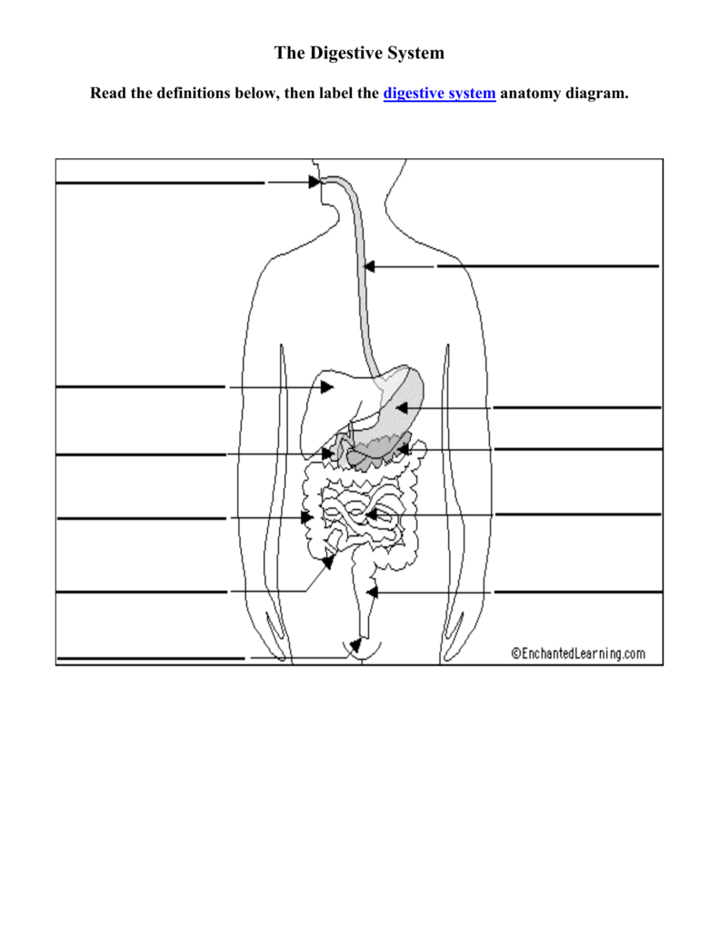 Diagram Of Digestive System Digestive Diagram