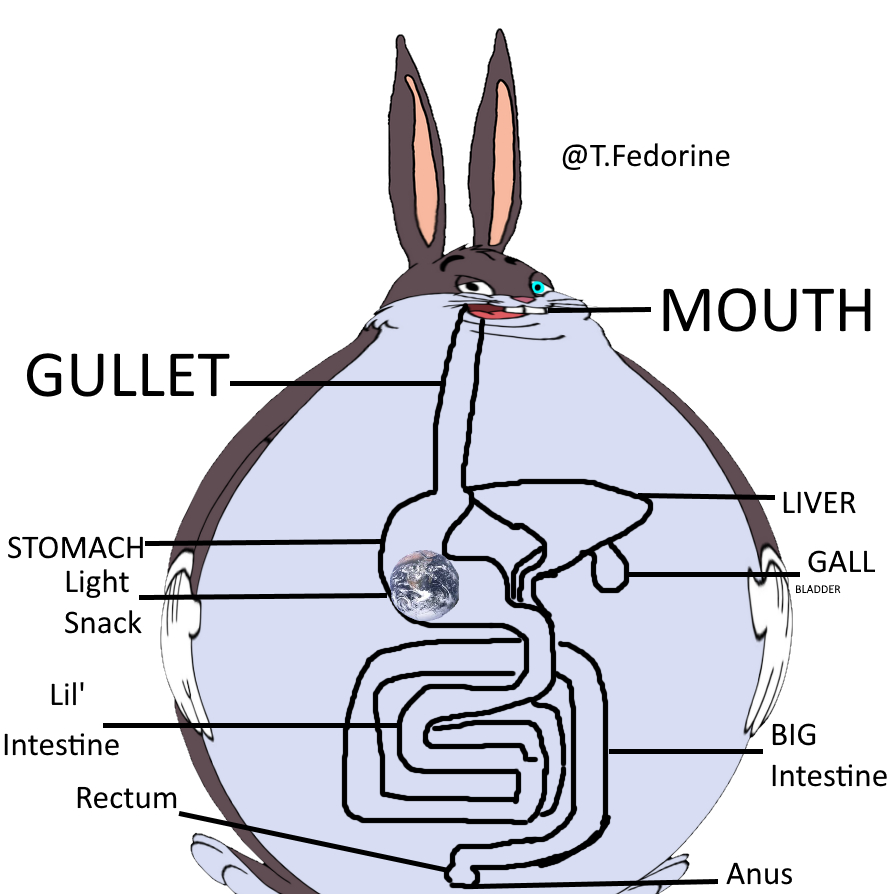 Diagram Of Digestive System Finally A Well Labelled Diagram Of The Rabbit Digestive System