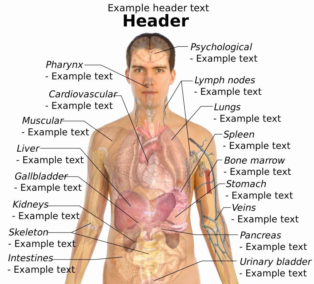 Diagram Of Human Body Blank Human Body Outline Best Of Body Organs Diagram Luxury Male