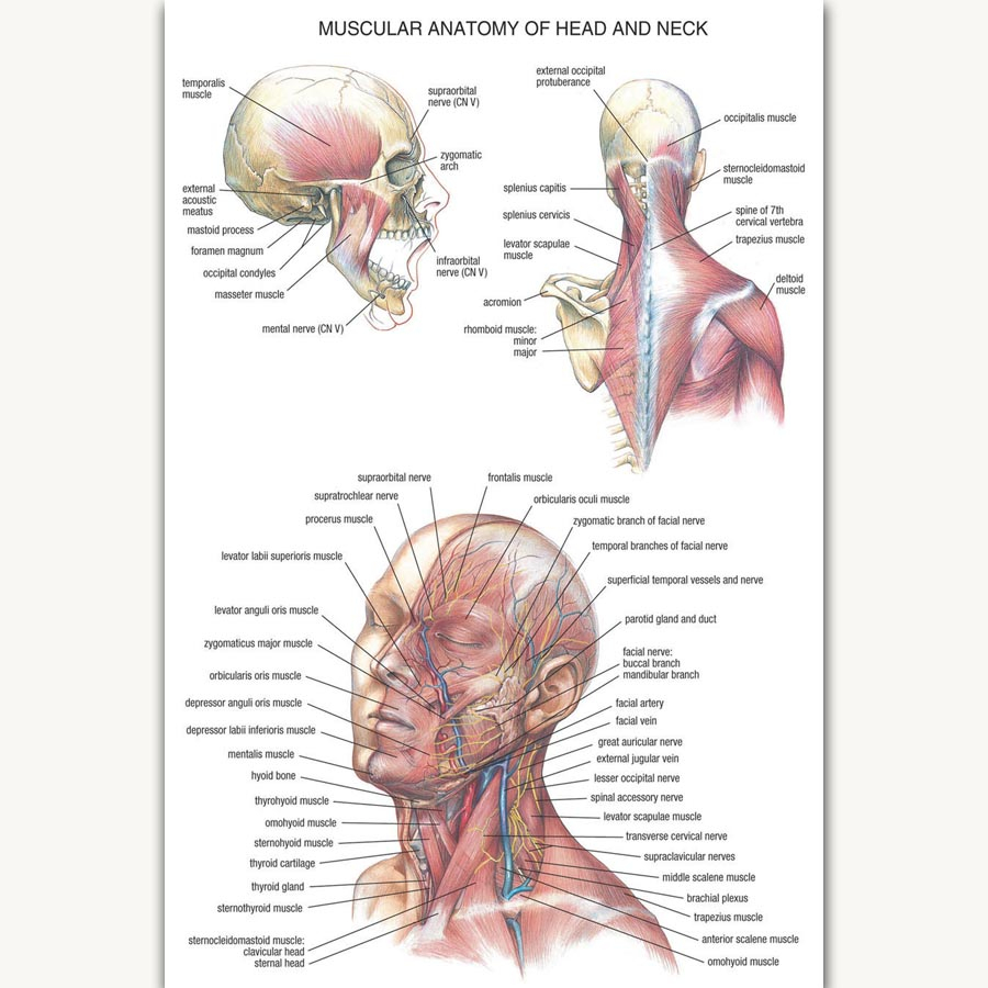 Diagram Of Human Body Fx1049 Hot Human Science Chart Human Body Anatomy Structure Brain Chart Poster Art Silk Canvas Home Room Wall Printing Decor