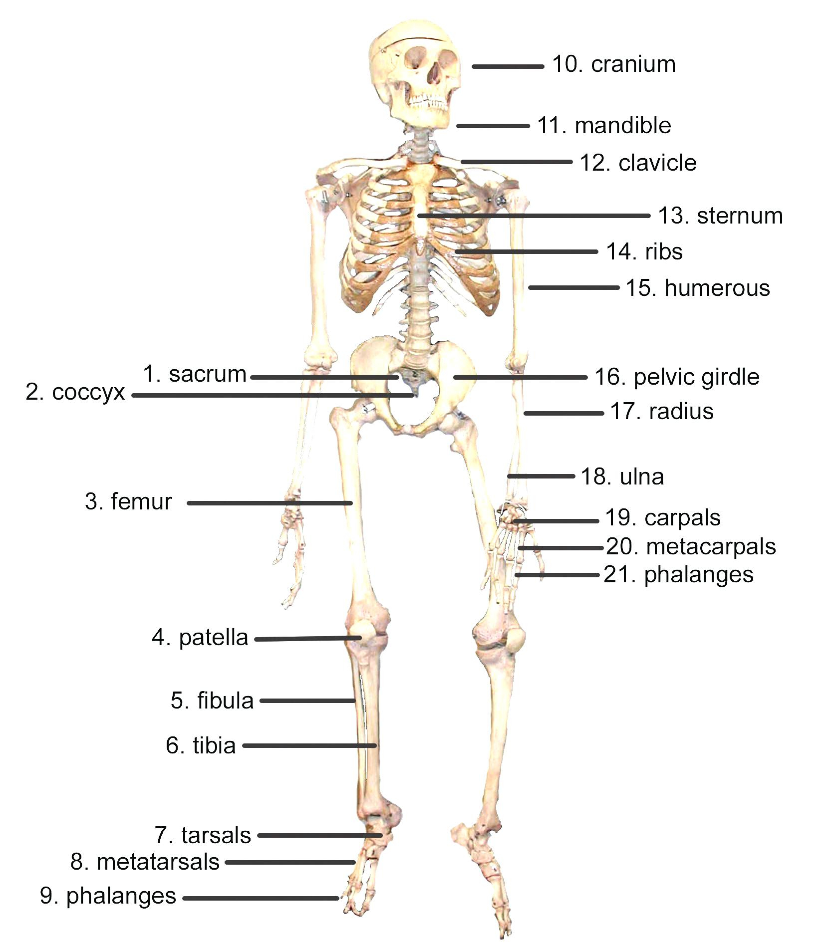 Diagram Of Human Body Labeled Body Parts Human Body Parts Labeled Lovely Labelled Diagram