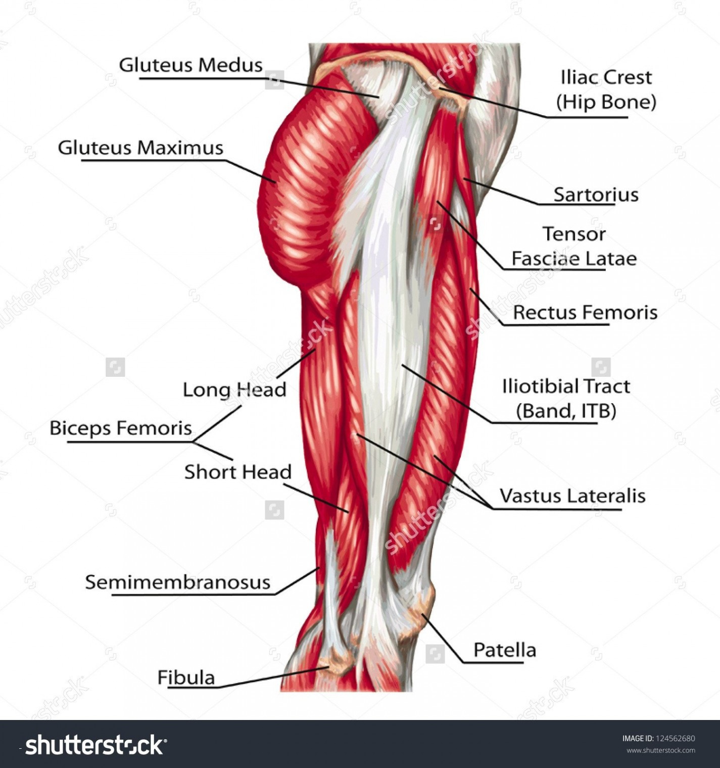 Diagram Of Human Body Labeled Diagram Of The Human Heart New Diagram The Human Heart
