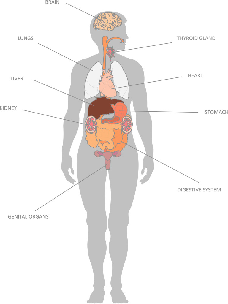 Diagram Of Human Body Organs Child Of Looking At Diagrams Of The Human Body It Was Weird To See